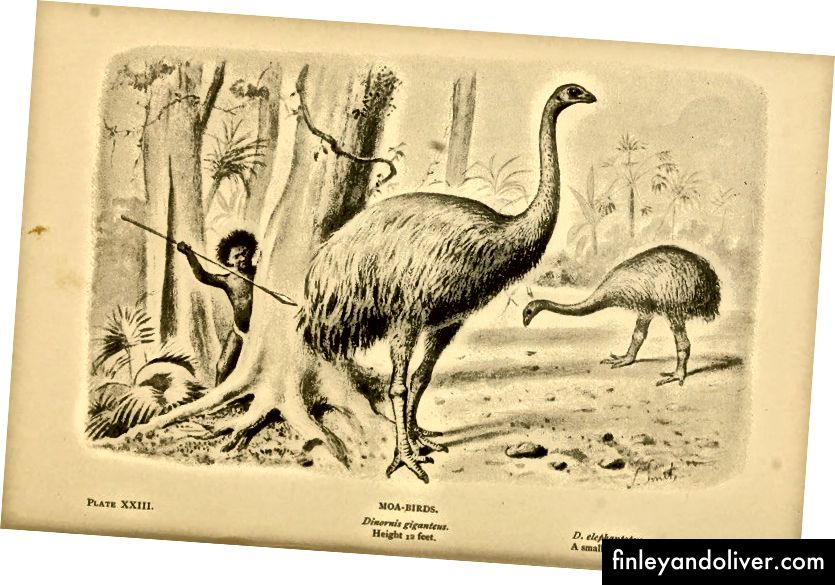 Săn bắn bản vẽ Moa của Joseph Smit (1836 đấu1929). Nguồn tập tin: Wikimedia Commons.