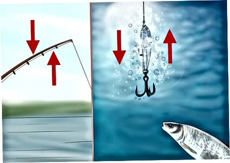 Catching Your Whitefish