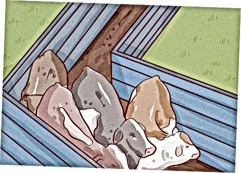 Qoramollarni ishlov berish vositasi orqali o'tkazish
