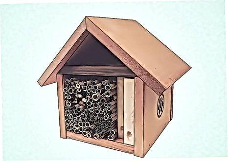 Nest qurish