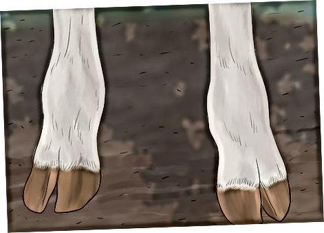 Ispitivanje nogu i kopita