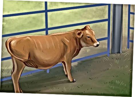 Liječenje goveda s otrovima otrovima