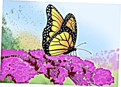 Kelebeklarni jalb qilish