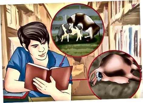 Planiranje mliječne farme
