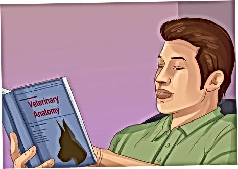 Veterinariya anatomisti bo'lish ko'nikmalarini rivojlantirish