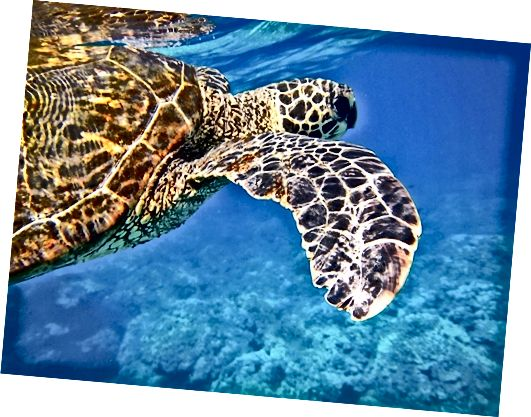 snorkeling ক্যাপশন