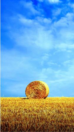 Üksildane heinapall