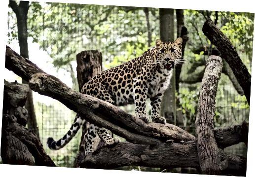 Jacksonville Zoo and Gardens Bildtexter