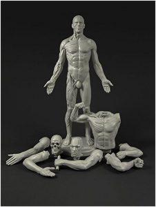 Männlech adaptéierbar Anatomie Figur
