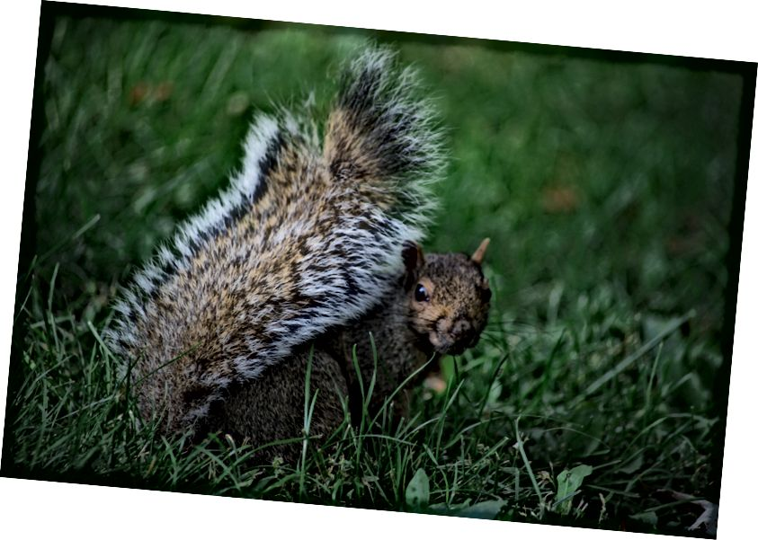 """https://unsplash.com/photos/UFOWWMqFPeU - nadam se da će vam se svidjeti dosjetka zbog """"oraha"""" i slike vjeverice."""