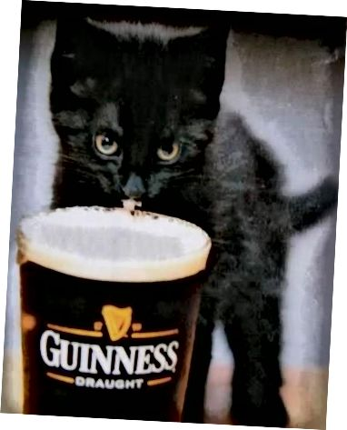 سيحاول هذا المنشور شرح كيفية إنشاء حساب Instagram جيد للبيرة دون استخدام أي صور قطة ، لأنه بصراحة ، هذا كسول فقط ، لذلك إذا أتيت للحصول على صورة قطة لطيفة اتبع Beer Cats على Twitter و F * ck off.