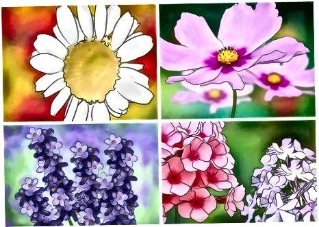 Få blommor