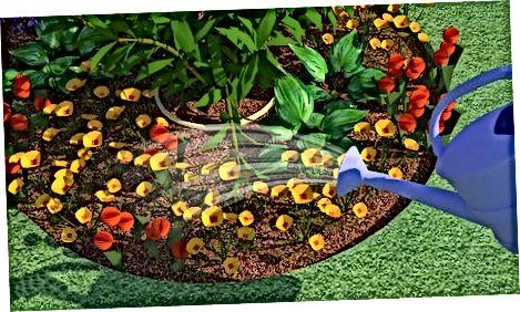 Plantera dina blommor
