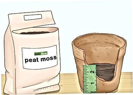 Výsev vašich semen