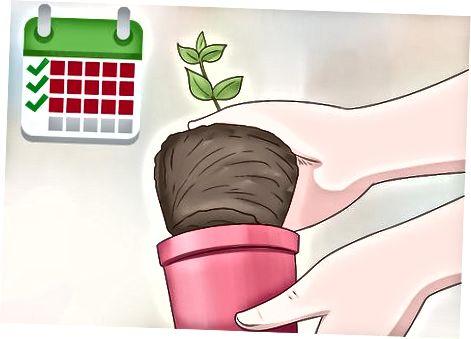 Pěstování vašich rostlin