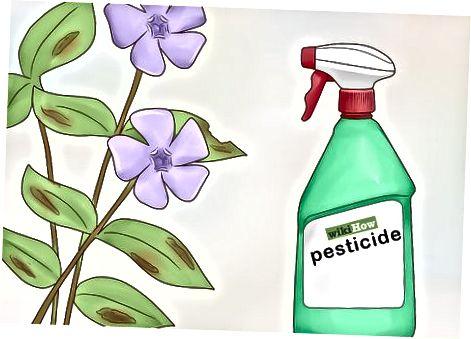 Péče o vaše rostliny