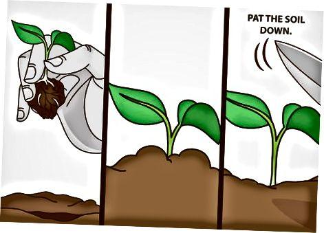 Засаждане на билки