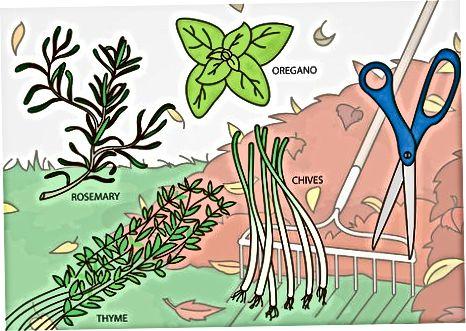 Поддържане и прибиране на реколтата на вашата градина