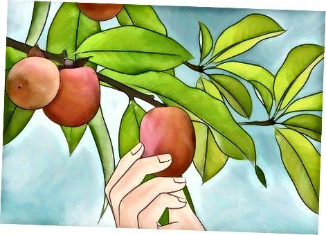 Oma hurmapuu eest hoolitsemine