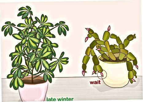 Odstranění mrtvých listů, končetin a květin