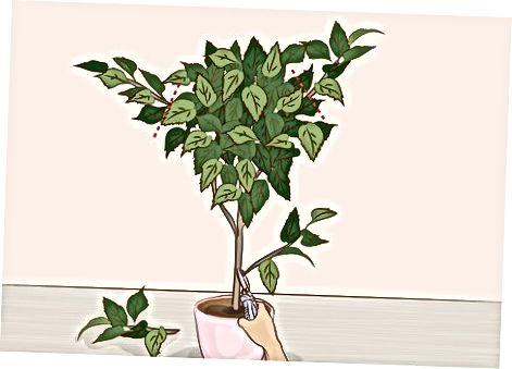 Omezování zarostlých větví a stonků