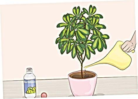 Údržba pokojových rostlin