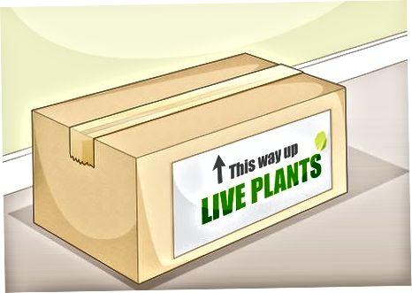Piegādes iesaiņoti augi