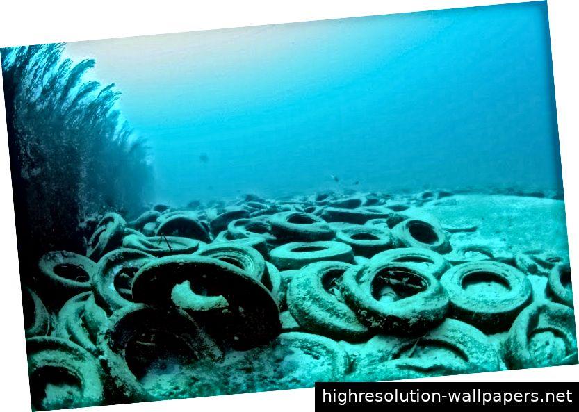 Osborne Reef: Ein ausgefallenes künstliches Riff von ausrangierten Reifen von Kaushik