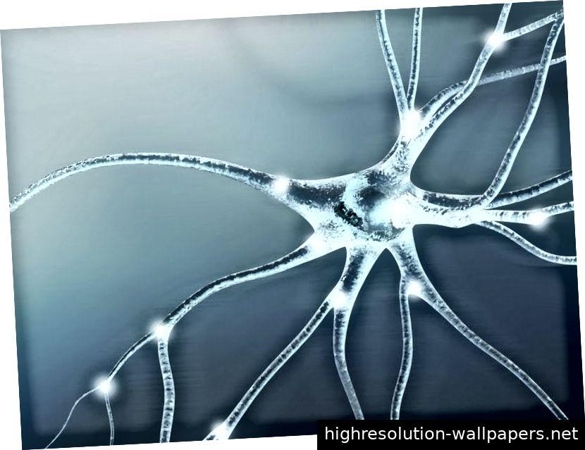 Bild 1: Durch das Abfeuern von Nervenaxonen können wir uns an Bewegungen in unserem körperlichen Gedächtnis erinnern und auf diese Erinnerungen zugreifen