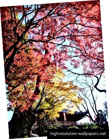Herbst im Ueno Park, Tokio. Bildnachweis: Tokyo Metropolitan Government Bureau of Construction