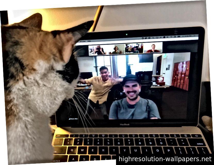 Undertiden er holdmøder endnu sjovere, når katte og dansekolleger melder sig!