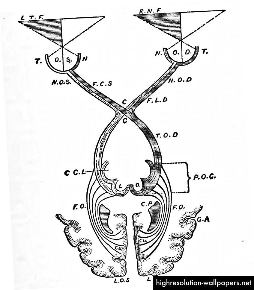 Ilustracija: Principi psihologije, William James, 1890
