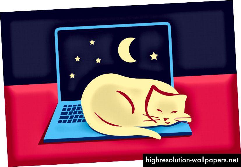 Katte kender det gode liv. Lær af dem!