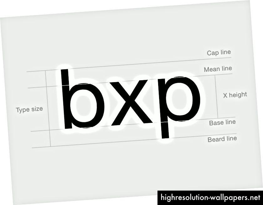 Typografiens anatomi