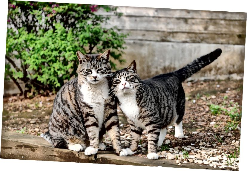 Låt oss se upp för varandra, precis som dessa coola katter.
