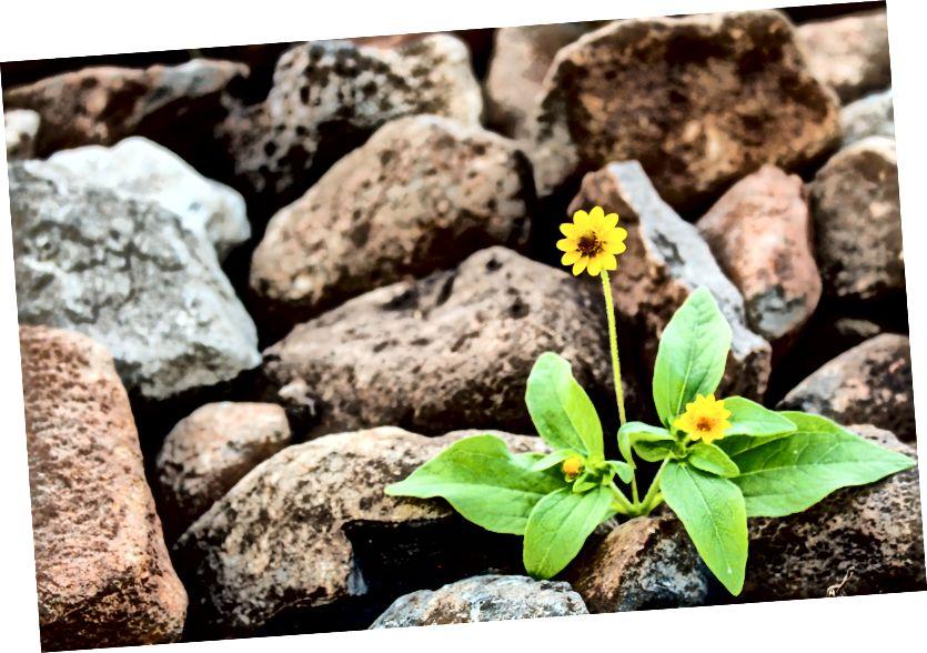 Esi zieds akmeņu dārzā.
