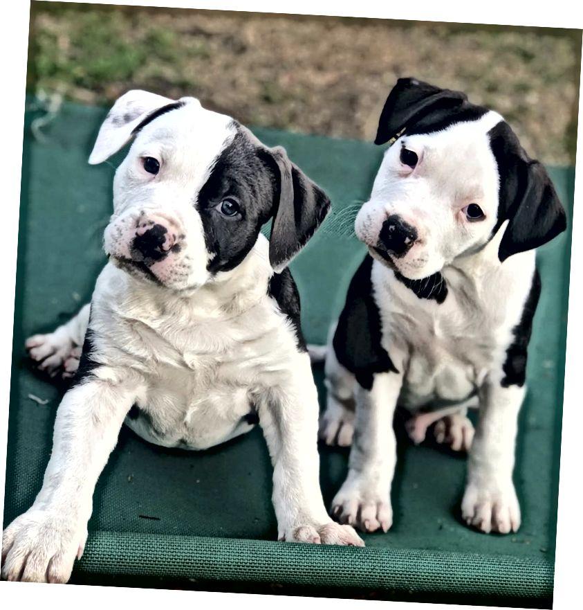 Անտեսանելի զանգվածներ սպասում են ձեզ LiamthePittie- ում, Bay Area- ի խնամատար շների ընտանիքում: