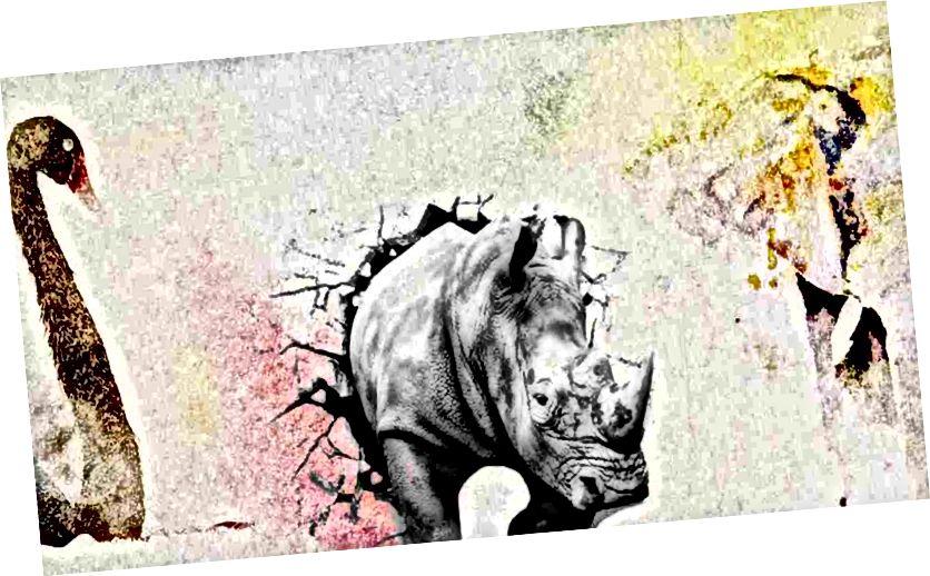 Mustat joutsenet ja harmaat sarvikuonot, kuva osoitteesta https://news.cgtn.com/news/3d67444d7945544e/share_p.html