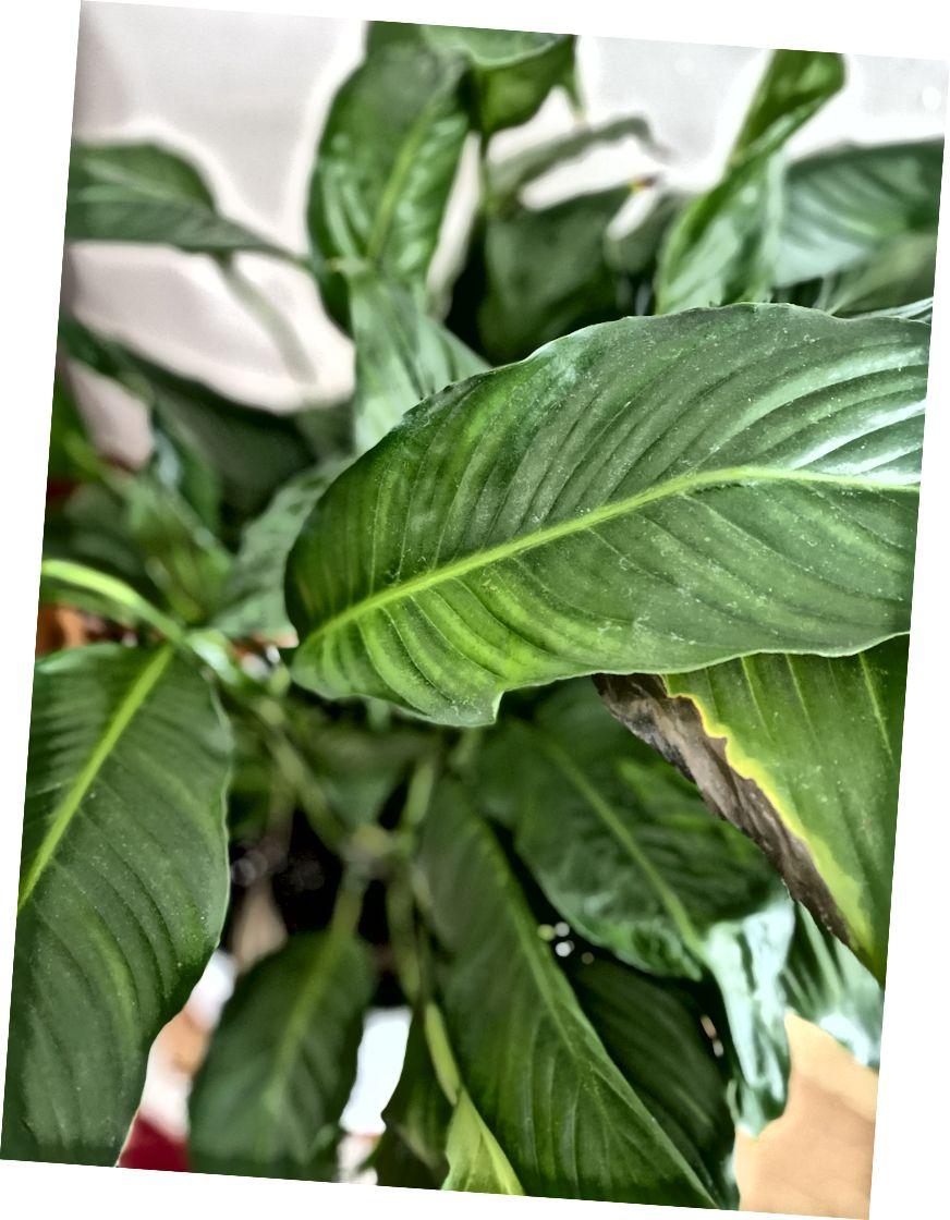 Fotó: Heather White. A szobanövények csökkenthetik a szorongást.