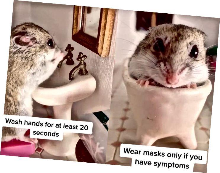 Hamsteri, joka tekee kaikkensa koronaviruksen leviämisen estämiseksi. Luotto: Hamesterz