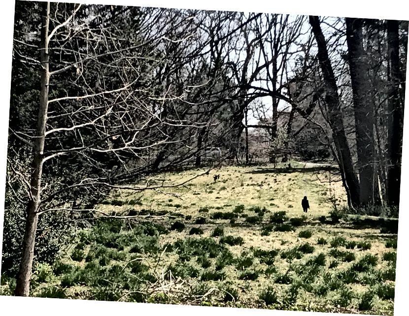 Una persona pasea a un perro dentro del Arboreto Awbury. El vasto espacio abierto fue en gran parte árido el martes por la tarde, a pesar de la oportunidad que brinda a las personas de participar en el distanciamiento social. / Letrell Crittenden