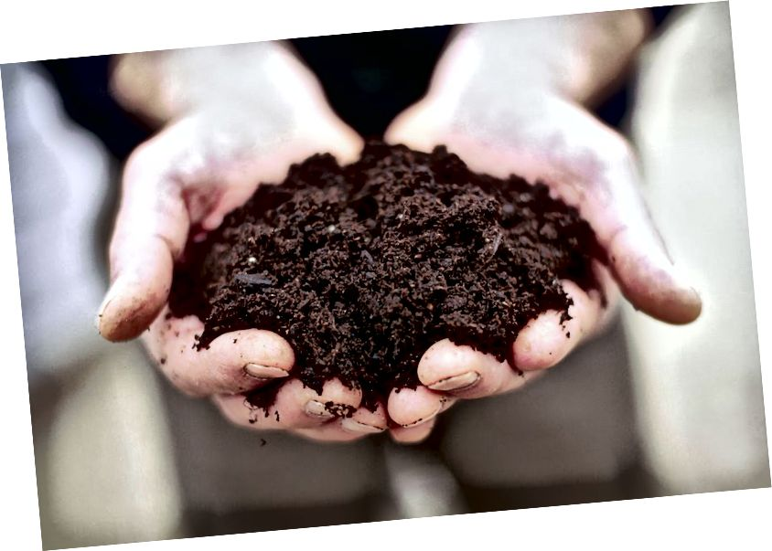 Cenizas a las cenizas. Polvo al polvo. Todos nos convertimos en abono, pero ¿quién de nosotros alimenta la regeneración de la Tierra?