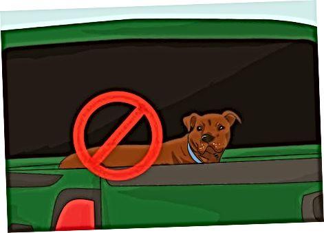 Uy hayvoningiz bilan avtomobilda sayohat qilish