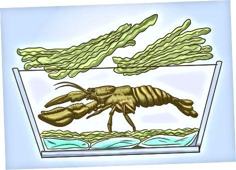 Lobsterni qadoqlash