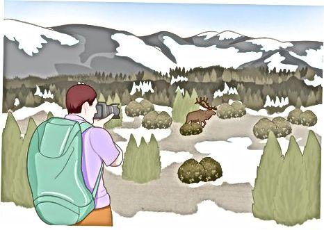 Sizning Yellowstone tajribangizdan zavqlaning