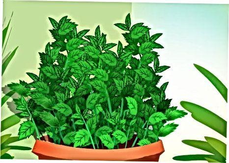 Вибір рослини