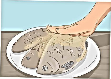 بازرسی ماهی