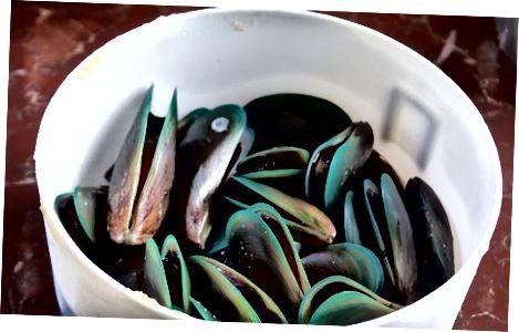 Geymsla Live Seafood