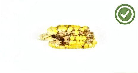 Mais zum Knacken wählen