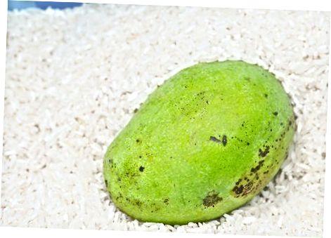 Дозрівання манго